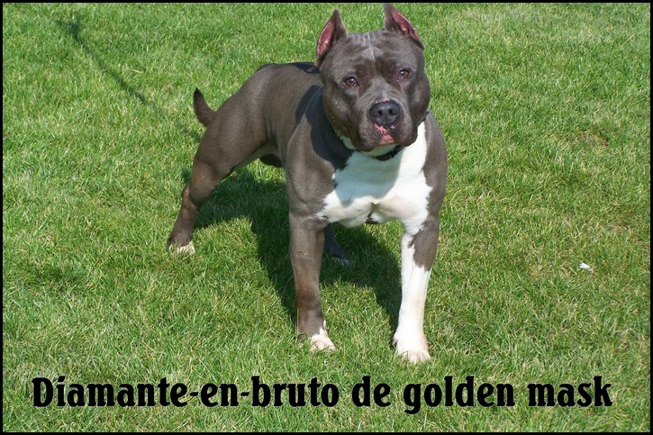 Diamante-en-bruto de golden mask